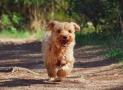 Top 4 melhores localizadores GPS para cães
