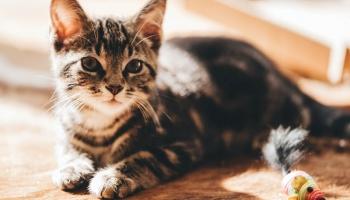 Top 7 melhores produtos para gatos domésticos