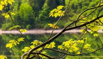 Top 10 melhores trituradores de ramos e folhas